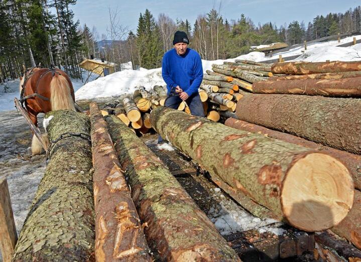 Masse bjørk, furu og gran blir i vår fraktet ut med ekte hestekrefter av Dag Tore Syversen og dølahingsten Garmos Junar - for å skape en skog slik den var for 100 år siden.
