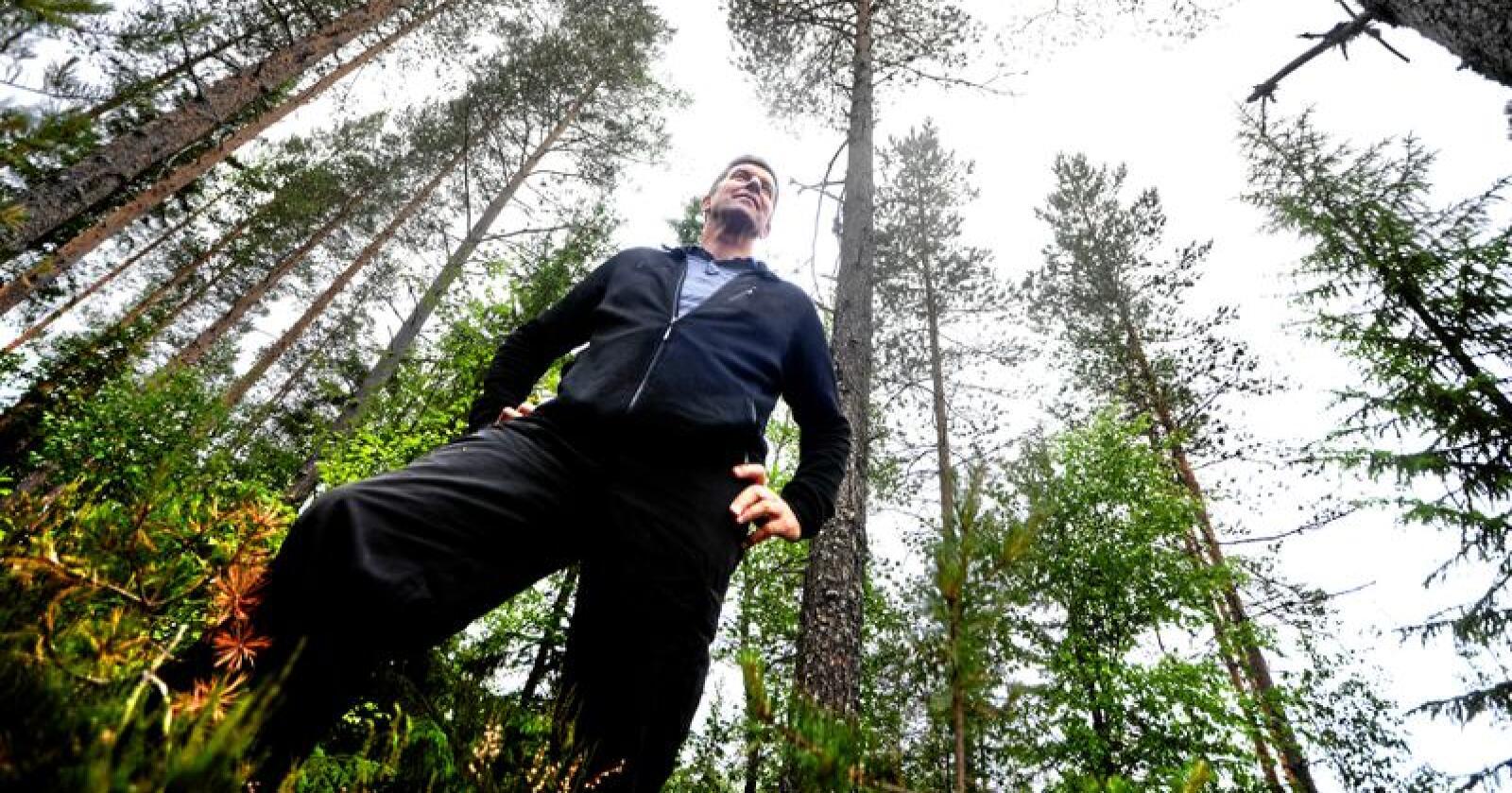 På bar bakke: Hadde Glommen Skogs Gunnar Gundersen vendt blikket nedover, ville han sett en viktig del av skogens klimaregnskap, skriver leserbrevforfatteren. Foto: Siri Juell Rasmussen