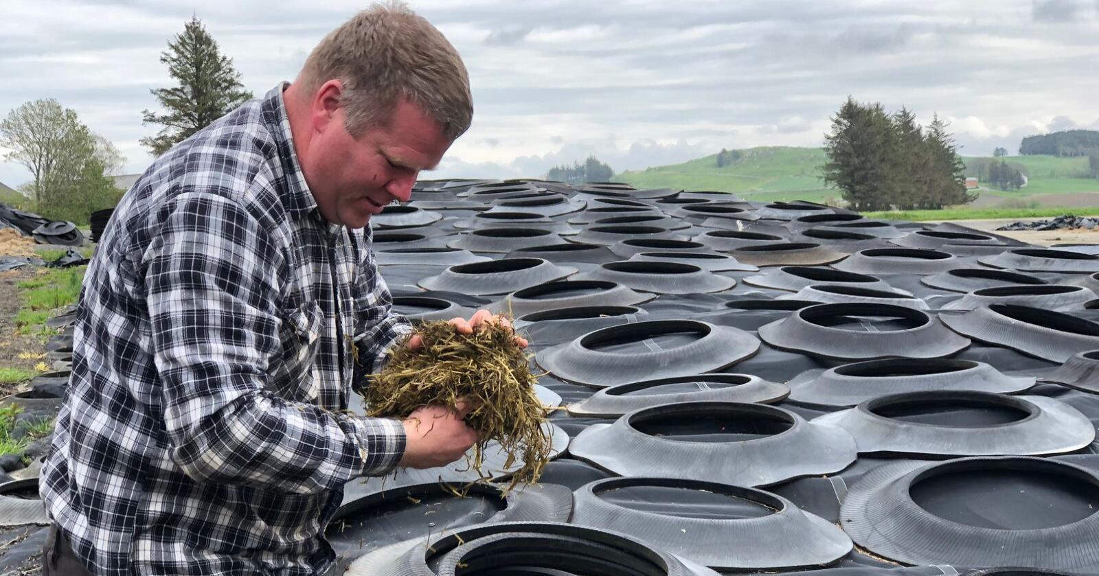 Helge Sveinsvoll er nøye på gjødsling og slåttetidspunkt, og legg vekt på god pakking i siloen. – Dårleg grovfôr merkast på lommeboka, seier Sveinsvoll. (Foto: Karl Erik Berge)