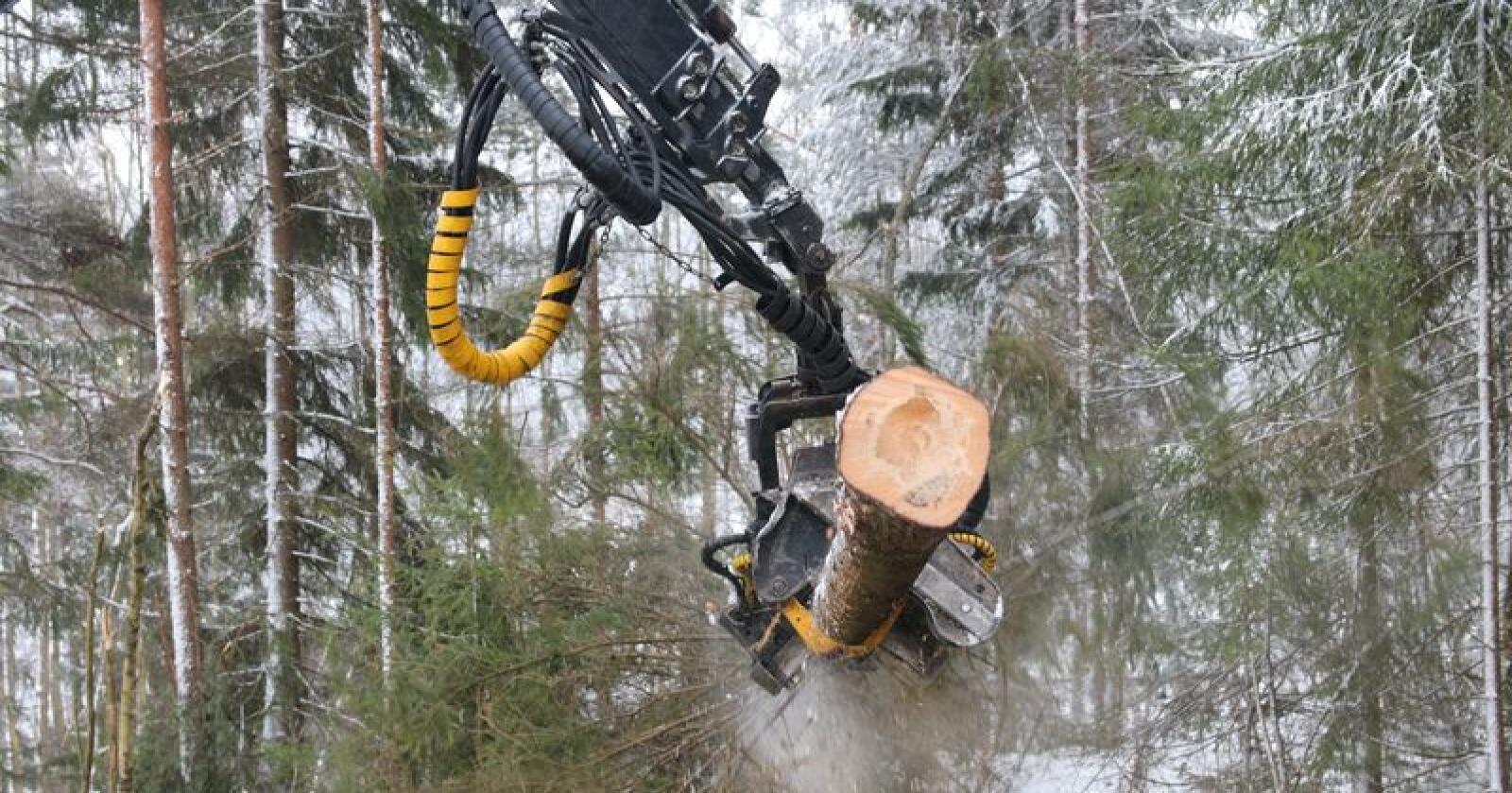 Skogindustri: – Når våre naboland gir så betydelige statsgarantier, må Norge gjøre det samme om vi skal ha noen sjanse til å konkurrere, sier skogeier og landbrukspolitisk talsperson i MDG, Harald Moskvil. (Foto: Dag Idar Jøsang)