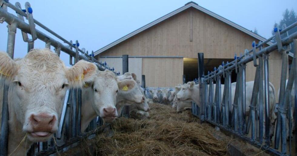 3280 husdyrprodusenter fikk nylig tilsendt et spørreskjema om dyrevelferd. Forskere vil vite mer om hvordan situasjonen oppleves fra bondens side. (Illustrasjonsfoto)
