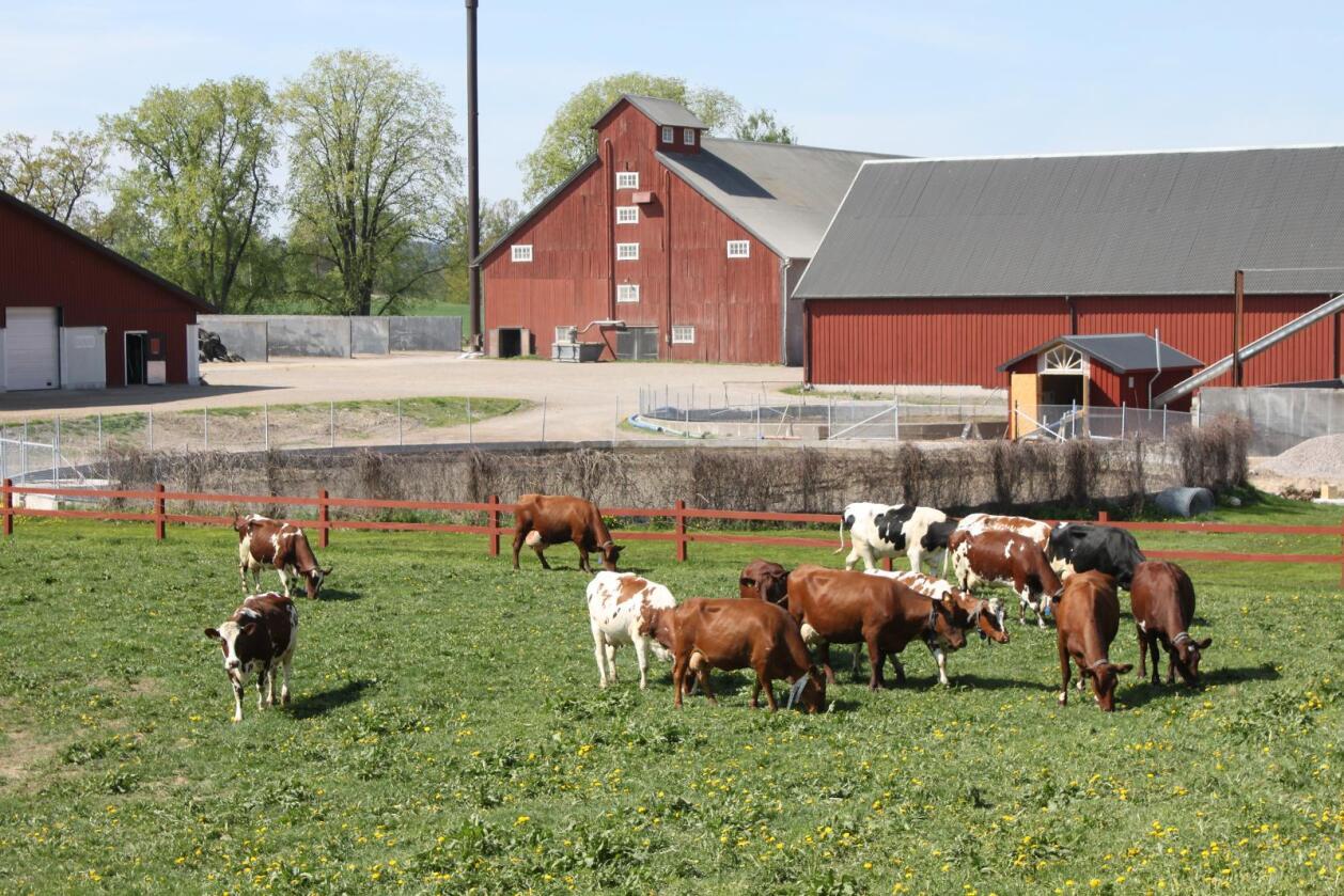 Den svenske studien viser at det er stor sammenheng mellom hvor tett gårdene ligger og smitteforekomsten. Foto: Camilla Mellemstrand.