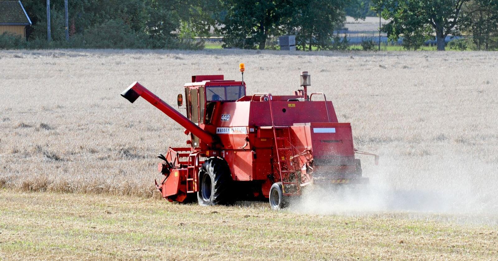 Lønnsomt: Det må bli mer lønnsomt å dyrke korn. Foto: Mariann Tvete