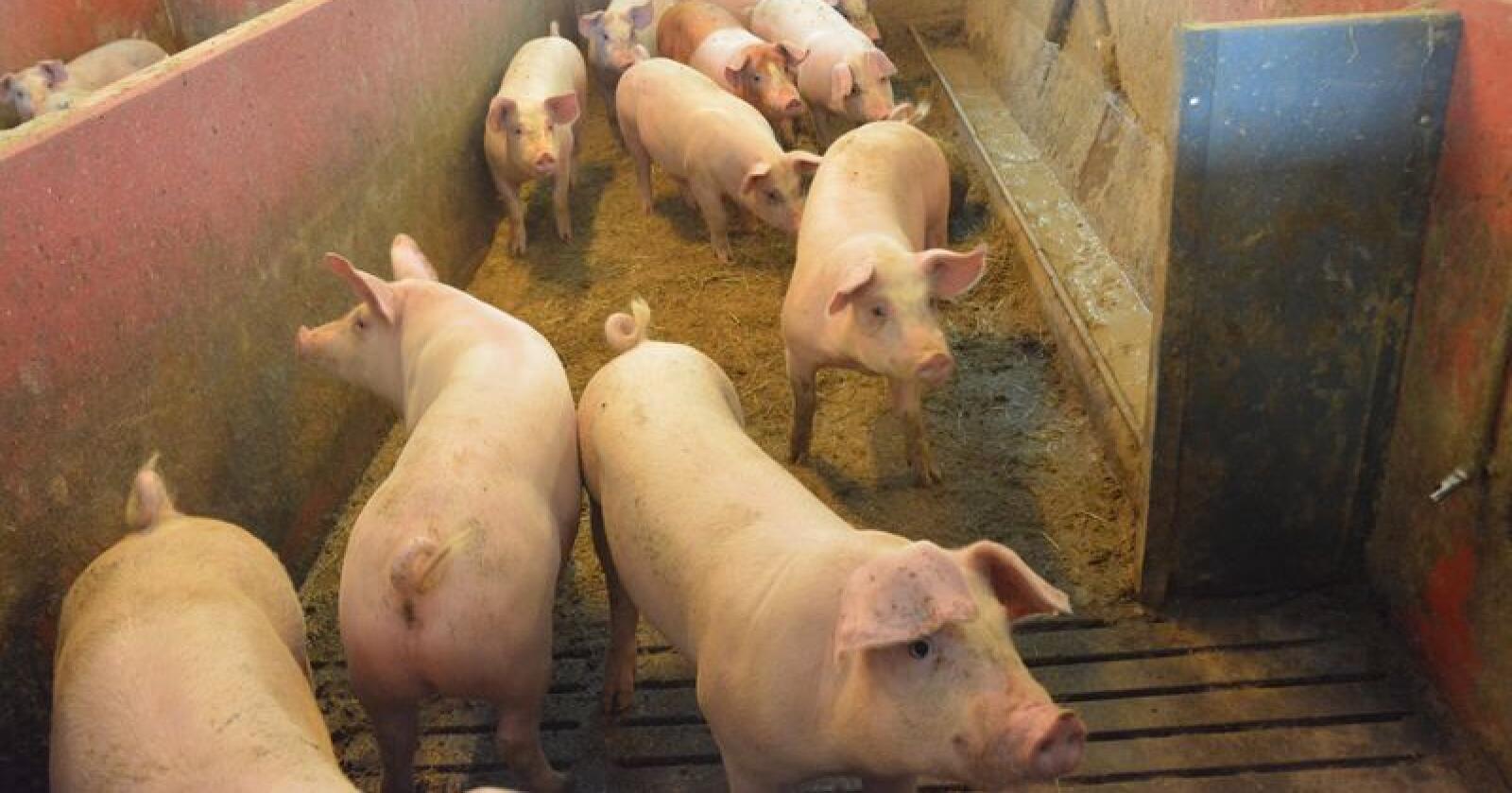 Mattilsynet gjennomførte tilsyn med dyrevelferden i 3074 dyrehold. Det er fortsatt flest bekymringsmeldinger om kjæledyr, men det var også mange meldinger om hester og produksjonsdyr. (Illustrasjonsfoto)