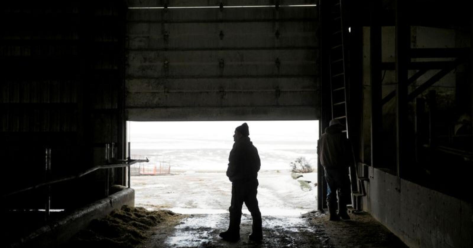 Vanskelige forhold: Bonden på bildet har uttalt seg til nyhetsbyrået AP om vanskelige forhold i amerikansk landbruk, men ikke om den angivelige økningen i forekomst av selvmord. Foto: David Goldman / AP / NTB scanpix