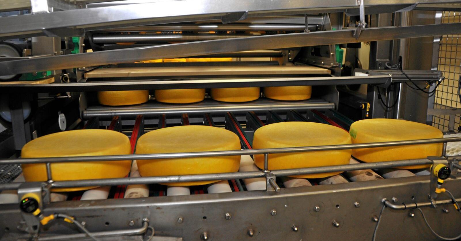 Osteeksport: Stopp for det nye Tine-meieriet i Irland i jula fører til eksport av 200 tonn Jarlsbergost frå Norge dei neste månadene. Foto: Anne Midtsæter