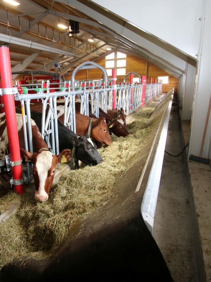 ENKELT: Med det vippbare fôrbrettet fra Serigstad trengs det ingen fôrskyver, samtidig som spillfôret lett samles i bunnen av trauet, og kan hentes med minilaster.