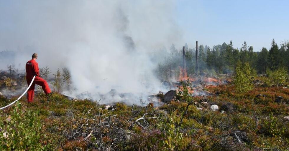 Ifølge Direktoratet for samfunnssikkerhet og beredskap, oppstod det i fjor sommer så mange som 2000 skog- og gressbranner i Norge. Men naturen har en helt egen evne til å hente seg inn igjen. Foto: Mostphotos