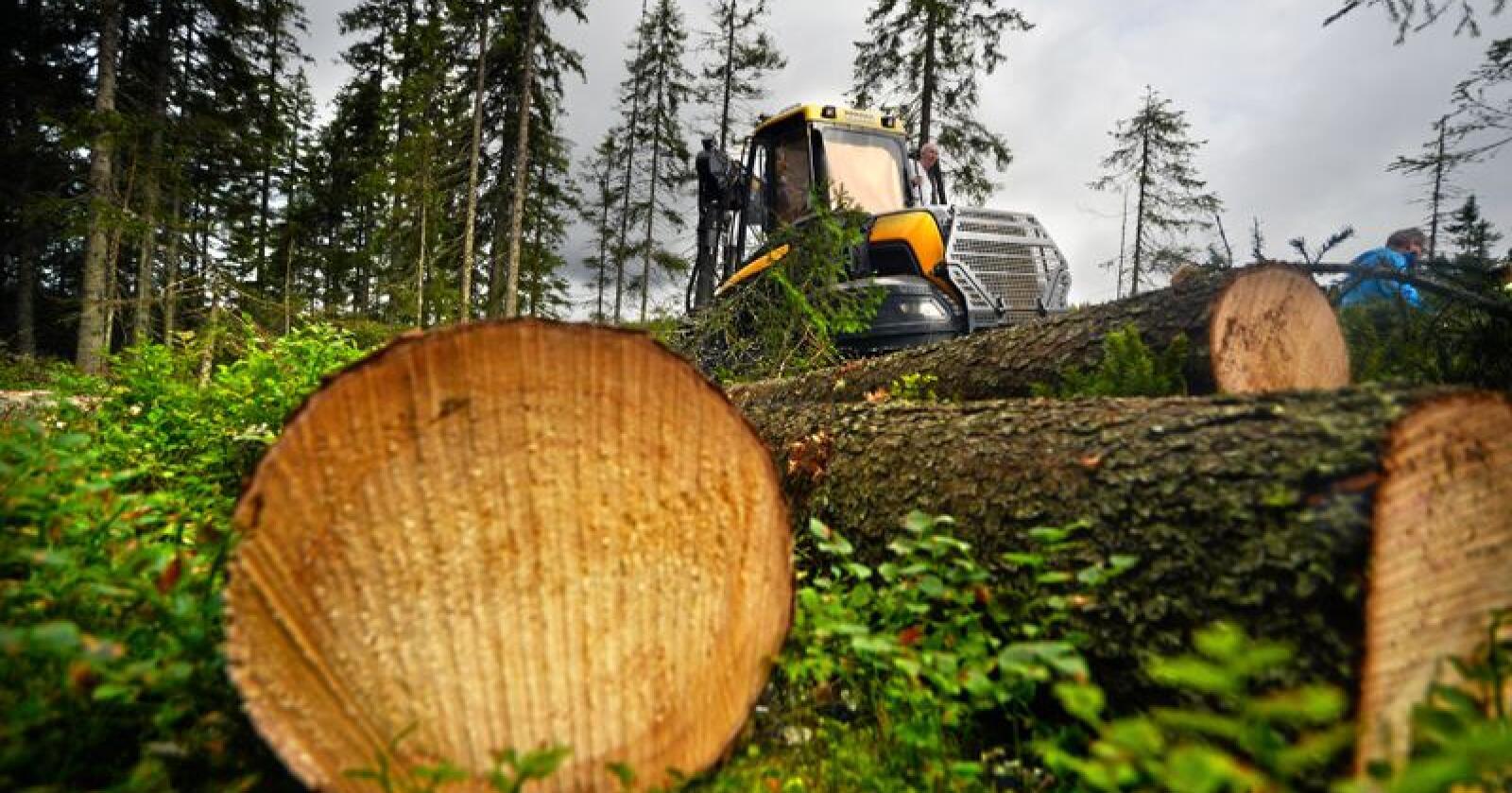 Hogst: Bare ca 30 prosent av tømmeret ved flatehogst går til trelast. Foto: Siri Juell Rasmussen