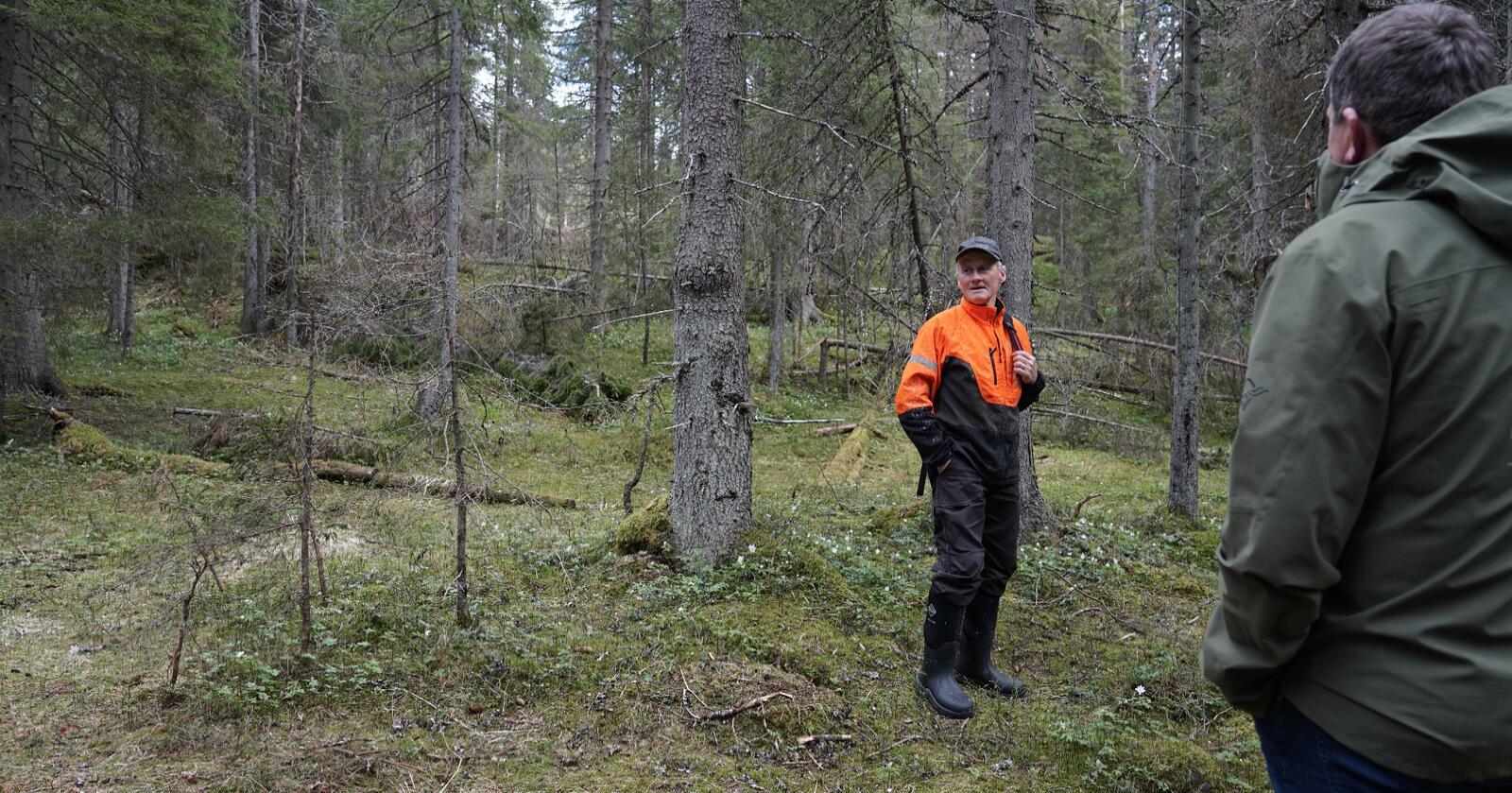 Pussig: Noen har feilregistrert en rødlistet art i skogen til Olaf Godli. Det skaper trøbbel for skogbruket. Foto: Andrea Sørøy