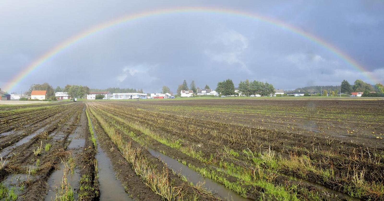 Vadefugl-vennlig: Er det best å vente med innhøstingen? Bedre sesongvarsling kan gi svaret. Foto: Mariann Tvete