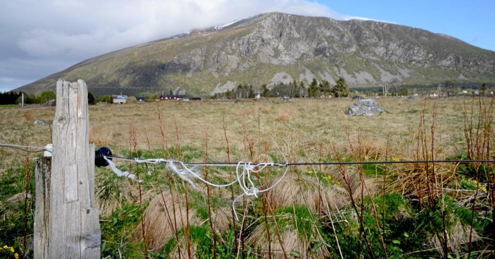Kulturlandskapsartene har ingen alternative leveområder enn det landskapet som bonden skaper, skriver kronikkforfatterne.  Foto: Mariann Tvete