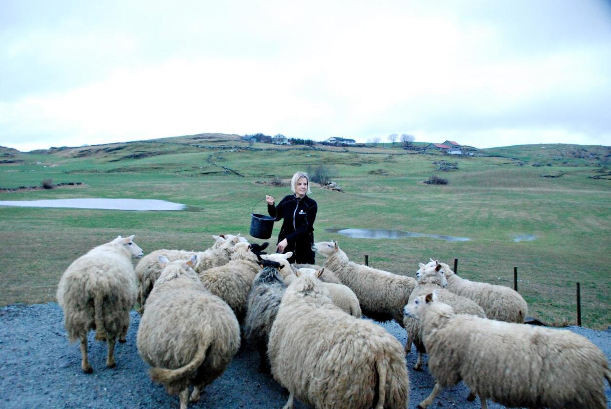 Hege Omdal og sauene vant krigen mot fotråten. 70 millioner kroner er brukt i bekjempelsesprogrammet Friske føtter. 30 millioner er betalt av bøndene selv gjennom omsetningsavgiften. Foto: Sjur Håland.