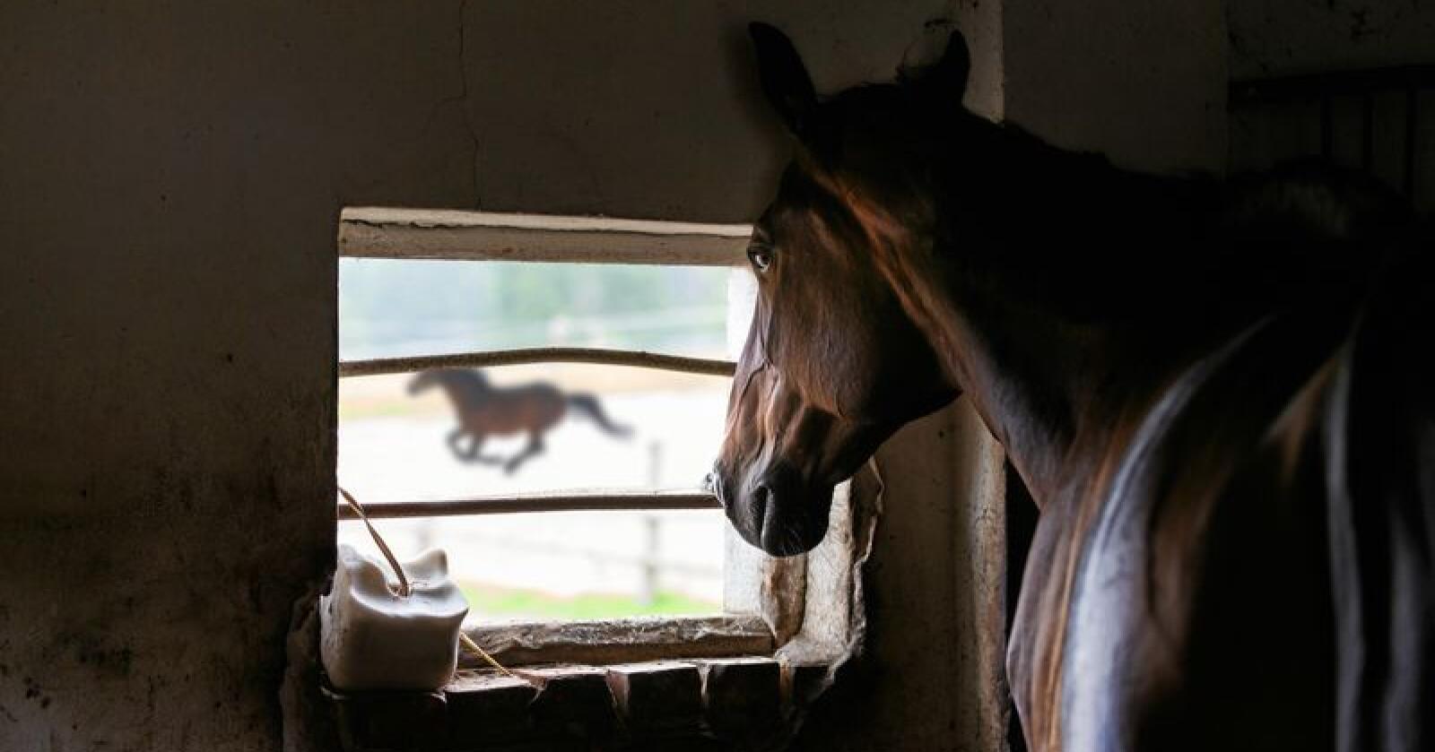 Hestenæringen trenger penger, skriver leserbrevforfatteren. Foto: Konstantin Tronin / Mostphotos