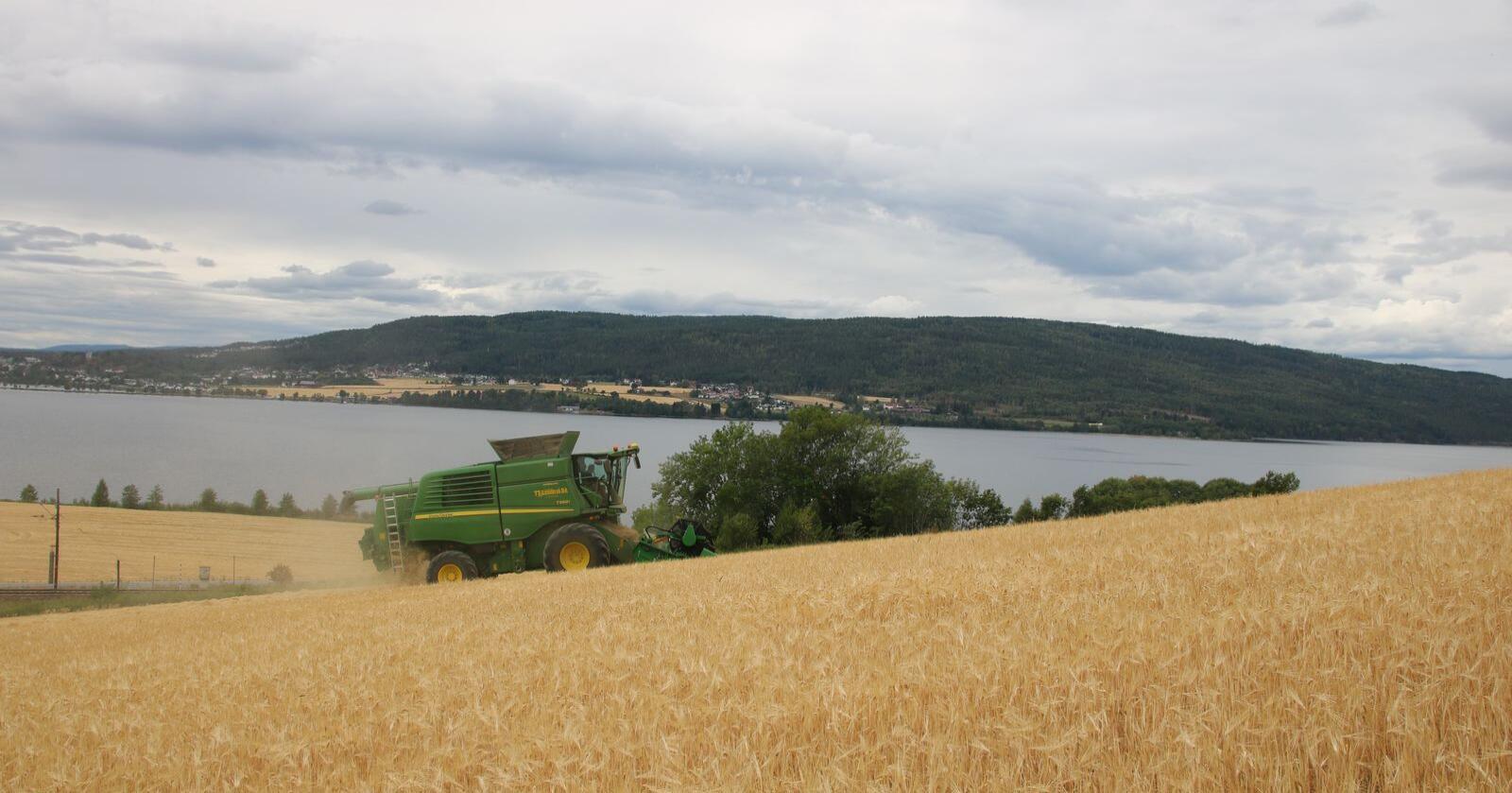 Ifølge ny NIBIO-rapport er gapet mellom reell og potensiell avlingsmengde høyere i Norge enn i resten av Europa. Arkivfoto: Traktor