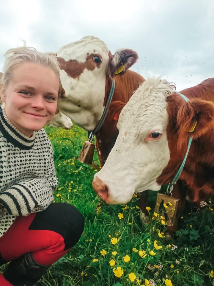 Ålreite: Nora Sandberg syns kyr er ålreite dyr, og hun liker at jo mer innsats hun legger ned i dem, jo bedre gjør hun det som bonde. (Foto: Privat)