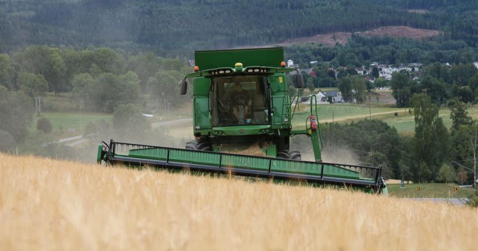 Mye korn står fortsatt på jordet og venter på tresking. (Arkivfoto)