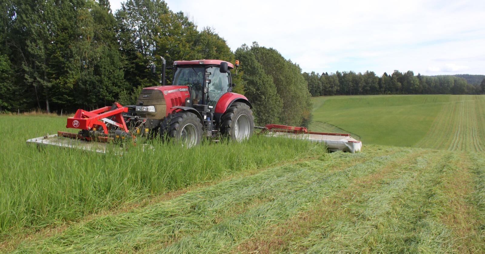 Forskere ved Århus Universitet i Danmark har klart å fremstille protein fra gras som kan erstatte soya i kraftfôr til enmaga dyr. Illustrasjonsbilde.