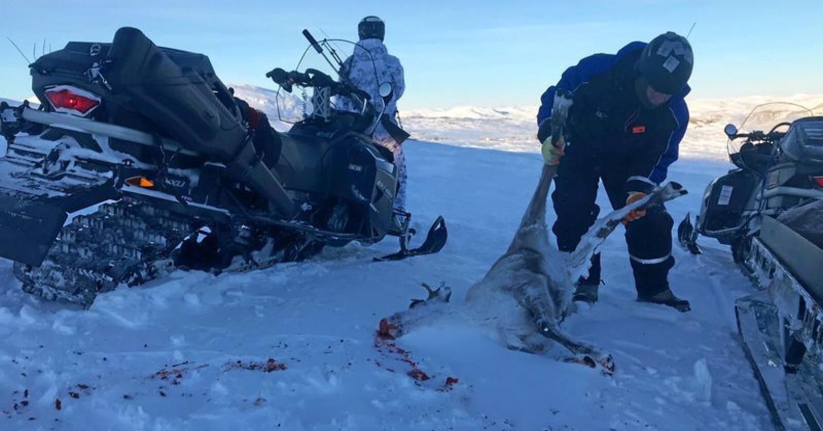Avsluttet: Jakten på villrein i Nordfjella. Foto: Sondre Dalaker / NRK / NTB scanpix