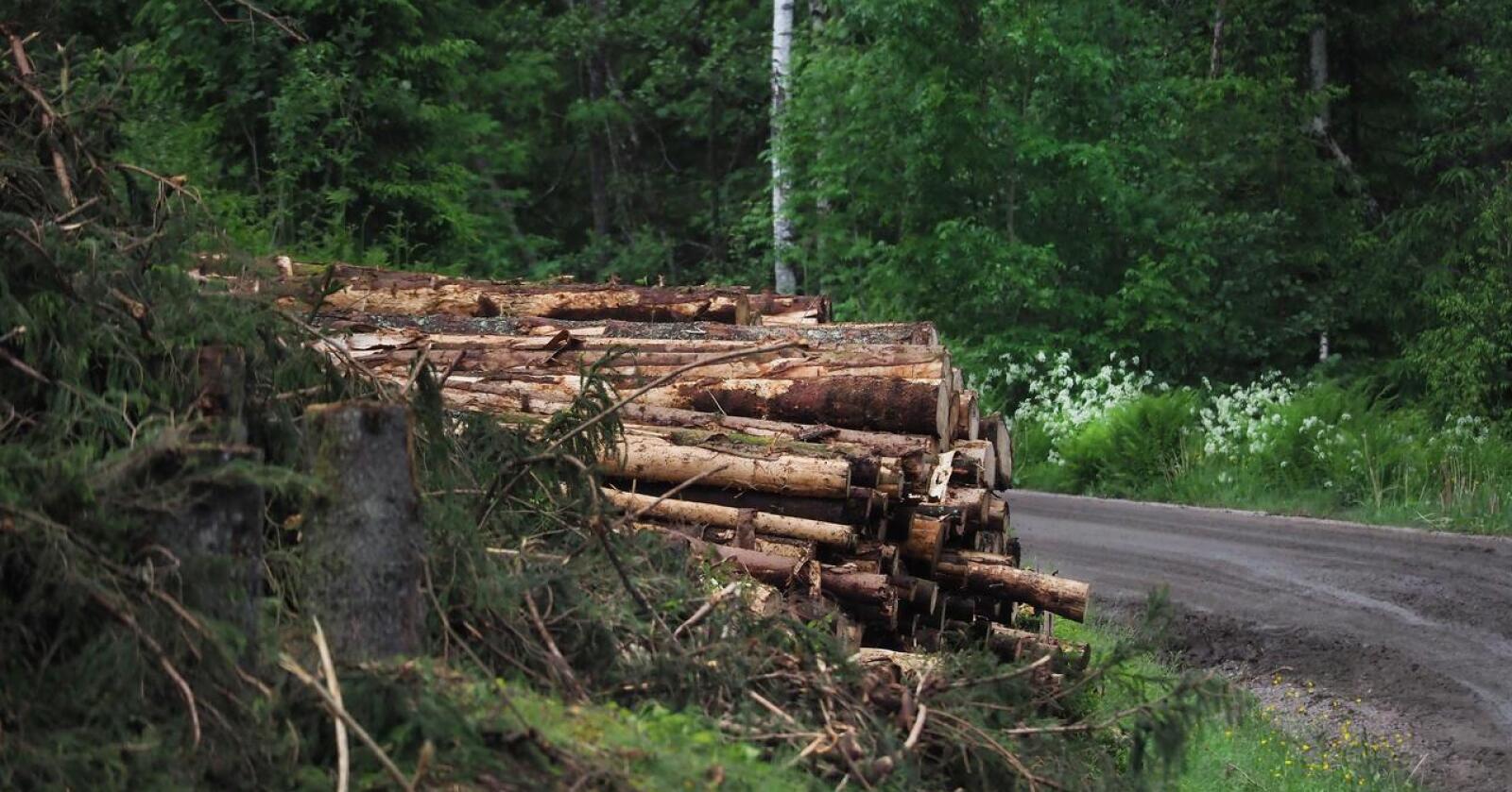 Skogbruk i Innlandet: Forvaltninga må tydeliggjøre at skogen er mer enn omsetningsverdien av tømmer, skriver Morten Aas. Illustrasjonsfoto: Siri Juell Rasmussen