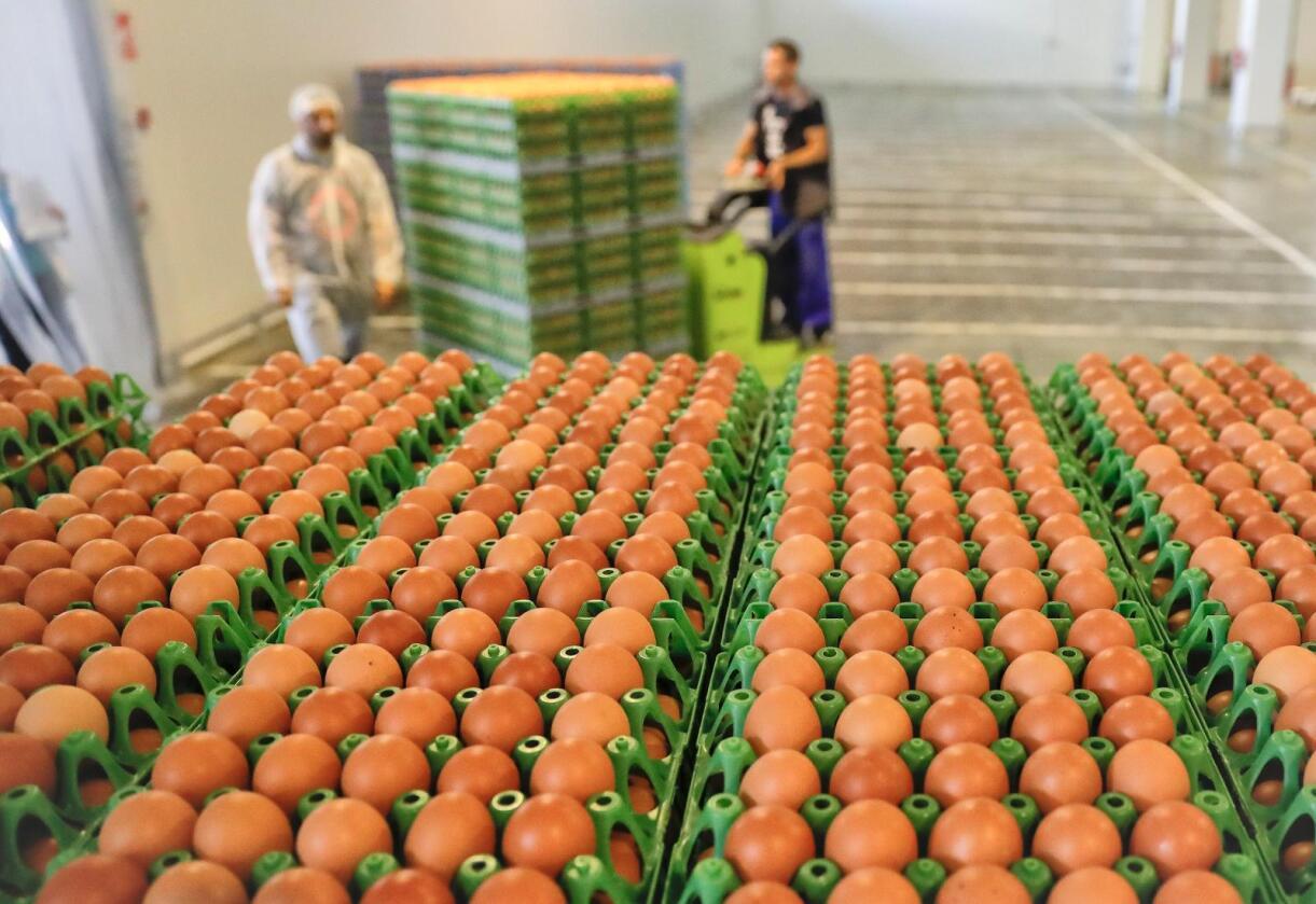 Egg på et lager i Gaesti i Romania. Foto: Vadim Ghirda / AP / NTB scanpix