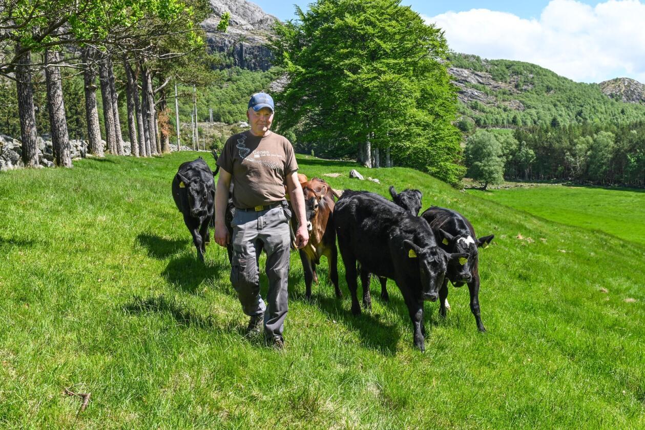 Jørn Viste driver melkeproduksjon sammen med sønnen Bjarte, og er opptatt av hvordan han kan optimalisere gjødslingen for best mulig avling.