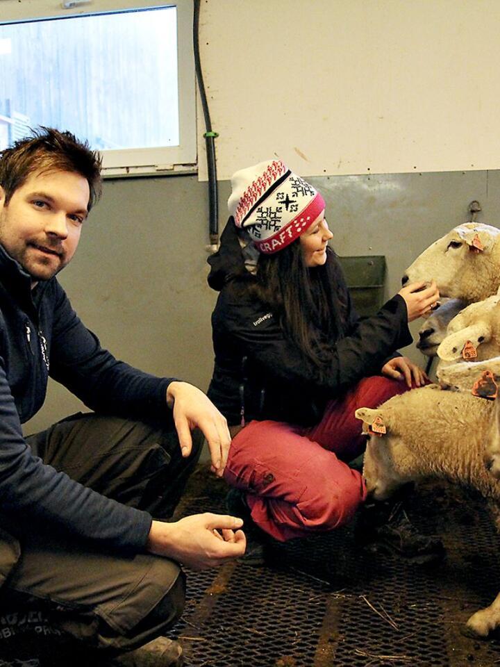 De unge sauebøndene Ingebjør og Sveinung driver hele tre gårdsbruk i Ål i Hallingdal. Begge to har vokst opp med saueproduksjon, men det var bare Ingebjør som planla å bli bonde.