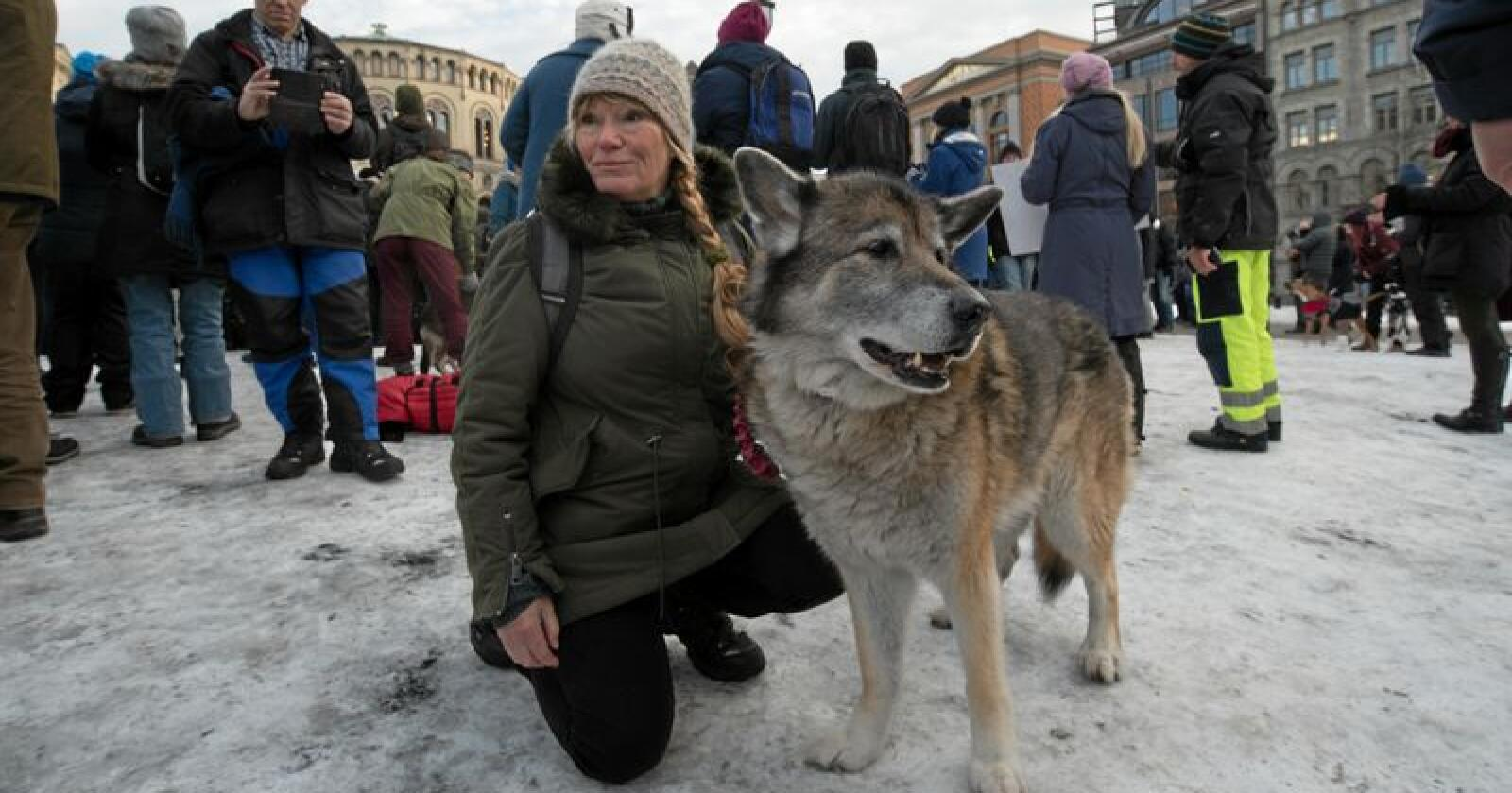 Heidi Dammann og hunden Yukon (som lignet mest på en levende ulv utenfor Stortinget) var med på demonstrasjonen. Alle foto: Vidar Sandnes