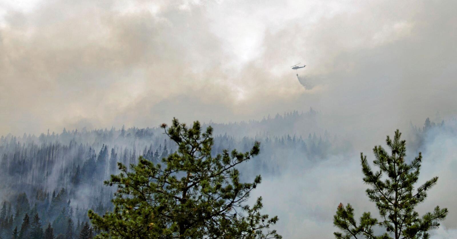 Skogbrann: Skogen er tilpasset brann, og de økologiske virkningene fremstår overveiende positive, skriver kronikkforfatterne. Foto: Lasse Stadeløkken / NTB scanpix
