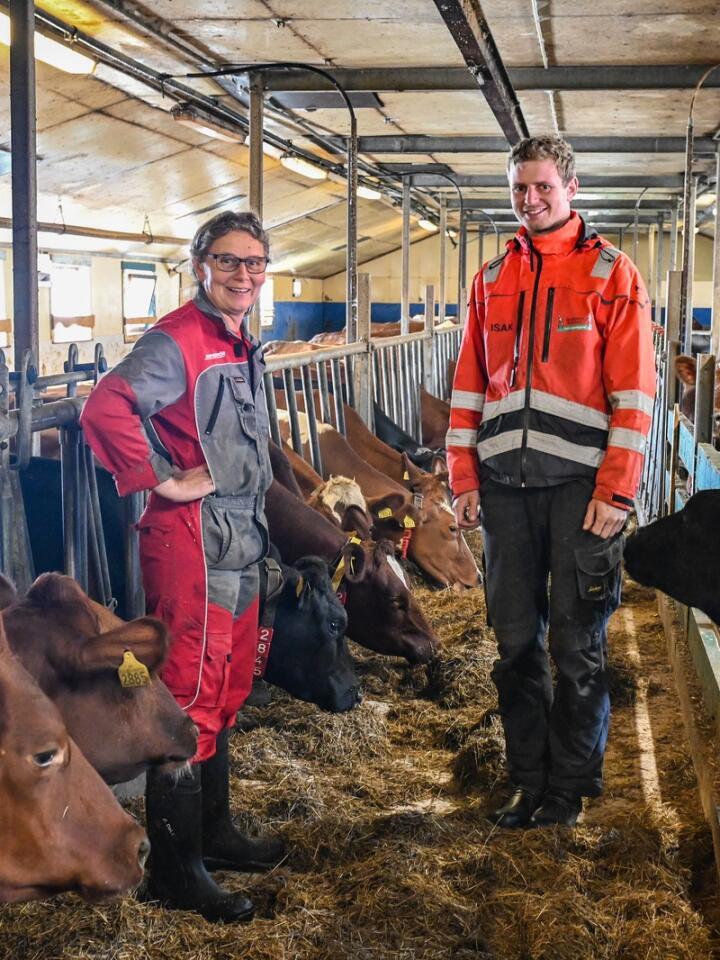Fullfôrblanding: Ingveig og sønnen Isak Jerpstad har nærmere hundre melkekuer, pluss ungdyr, på den ene gården til Jamtsve/Hanemo samdrift. Der er mye av kraftfôret erstattet med krossa korn, som gis i en fullfôrblanding.