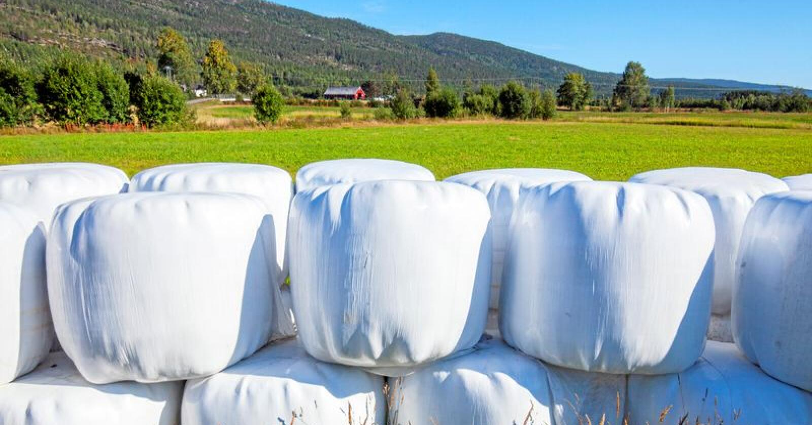 Landbruksdirektoratet har laget en utredning om hvordan man på sikt kan øke produksjonen og bruken av norsk fôr i landbruket. Illustrasjonsfoto: Halvard Alvik/NTB
