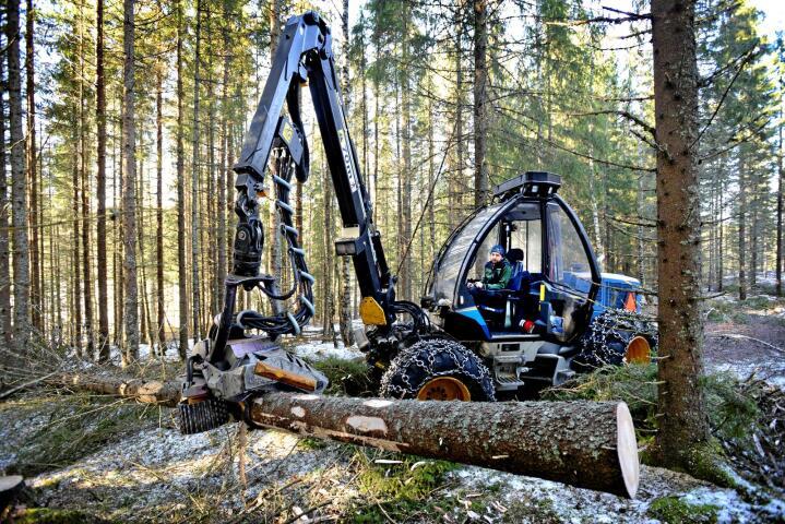 Rydde gutt: Tynning i skogen er viktig for at det skal bli produktiv skog. Anders Tørnby Nilsen har jobbet i skogen siden 2000. Alle foto: Mariann Tvete