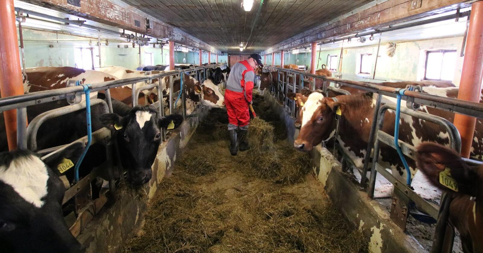 Viktige arbeidsplassar: Dersom landbruket vert attraktivt, kan det gje mange nye arbeidsplassar, skriv Kolbjørn  Gaustad. (Illustrasjonsfoto: Norsk Landbruk)