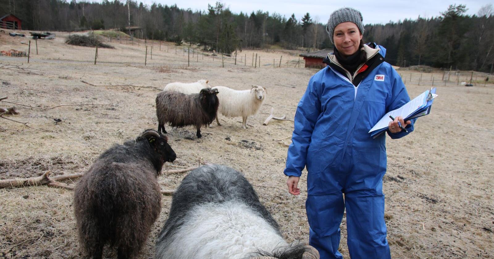 Veterinær i Mattilsynet i Østfold og Follo, Henriette Hjersing, på skrapesyketilsyn på Skuterud gård. Foto: Knut Houge