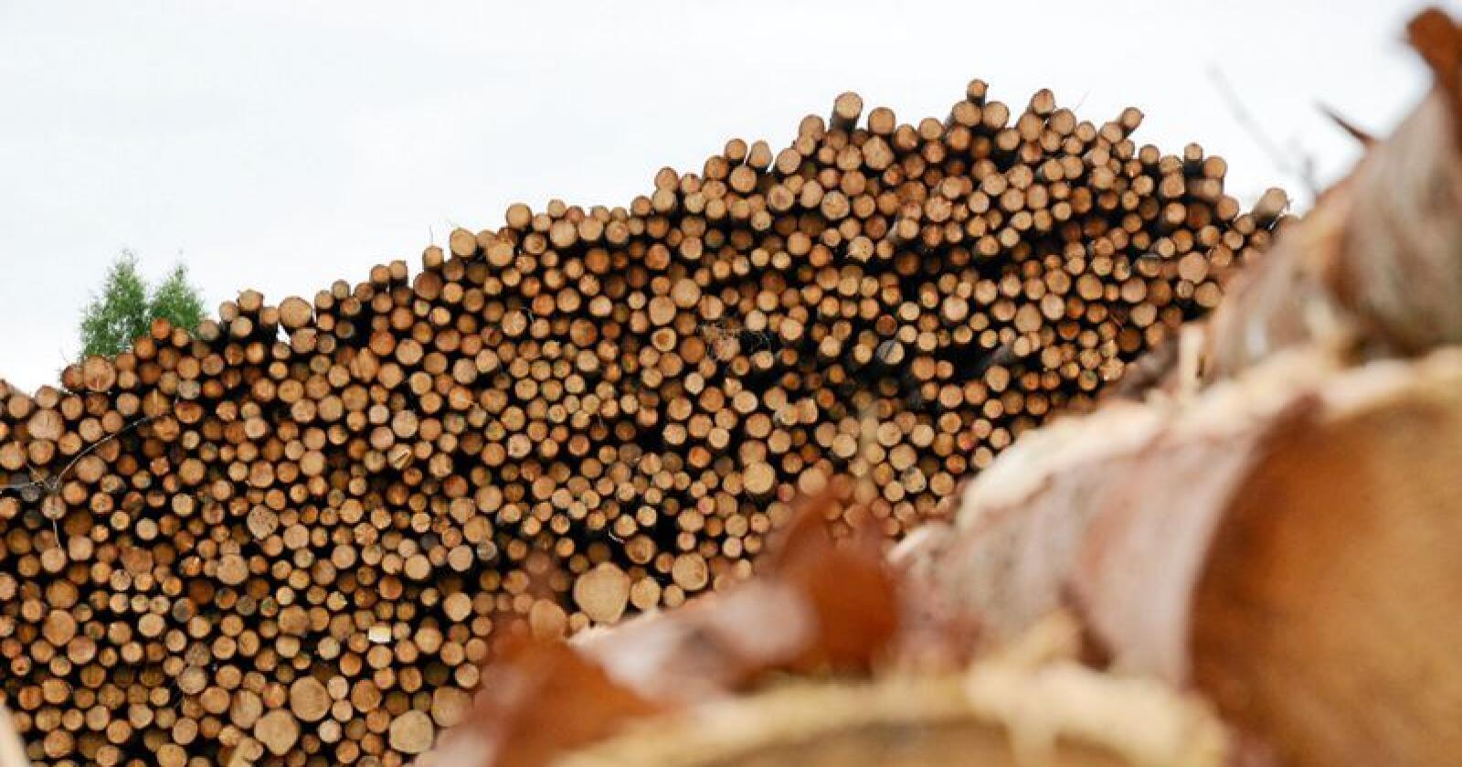 Det importes ulovlig tømmer til Norge, som kan komme fra ulovlig hogst og som kan ta med seg skadelige arter til Norge. Illustrasjonsfoto: Siri Juell Rasmussen
