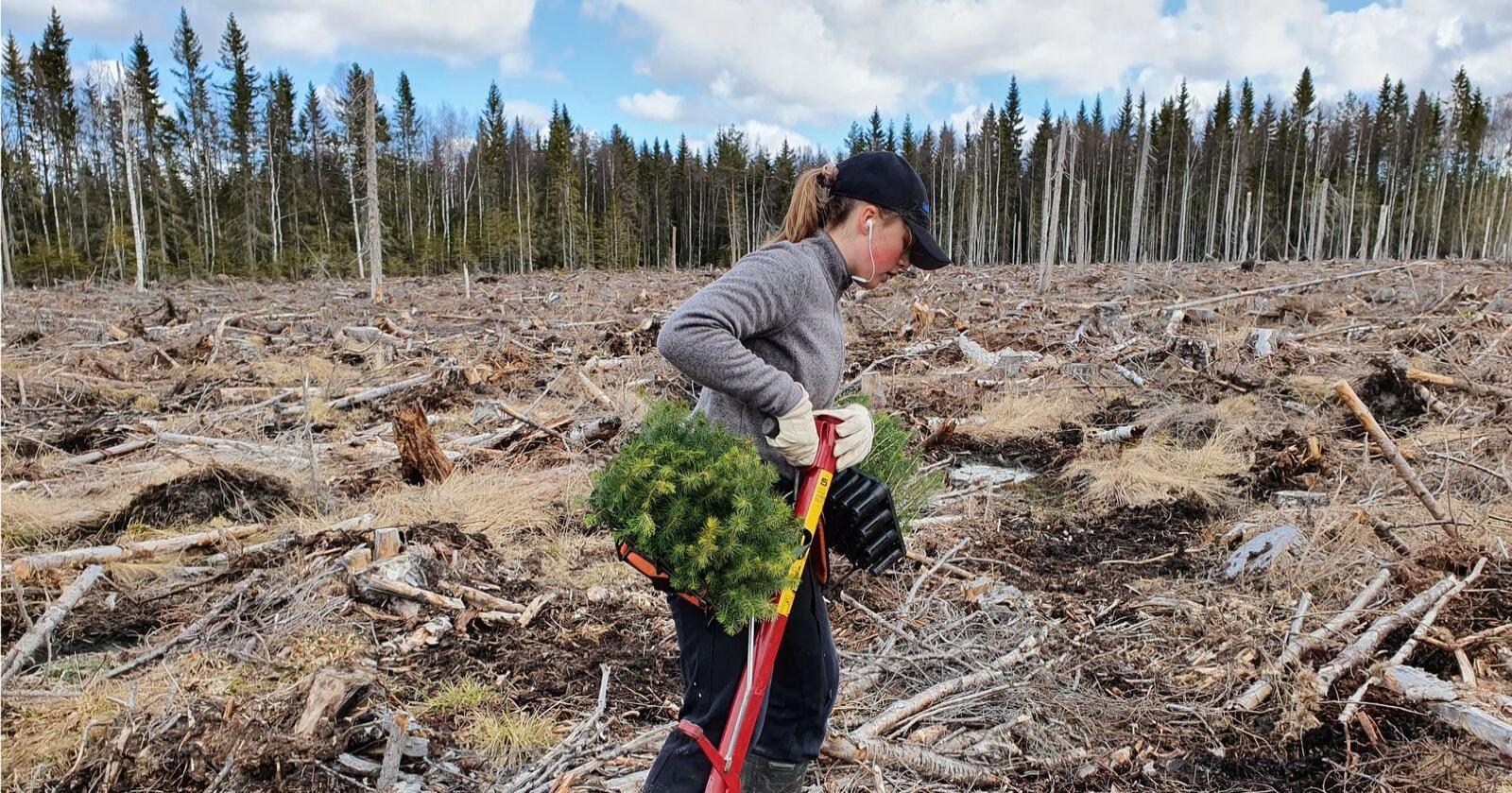 Oppfyller mål: Skogen gjør at Norge allerede oppfyller ambisjonene for 2030-målet, skriver innsenderen. Illustrasjonsfoto: Mostphotos