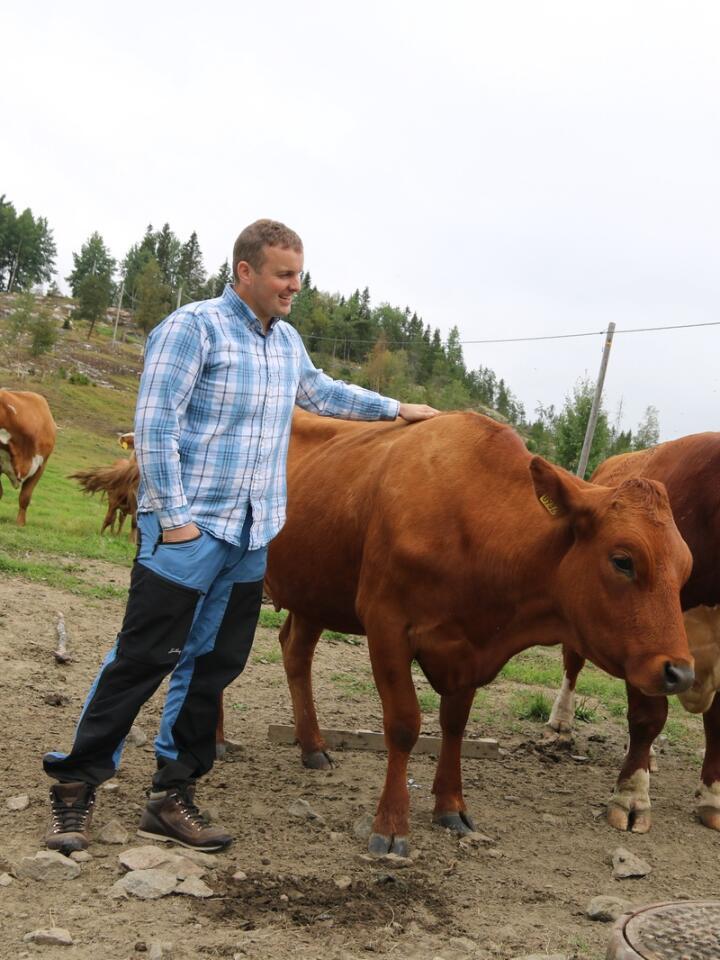 GODKJENT: Gunnar Hjellan og Ole Bragstad blir raskt populære når de først deler ut kos. Arealet hadde vokst igjen med skog, men er nå åpnet opp igjen, og Hjellan har allerede fått 50 dekar godkjent som innmarksbeite.