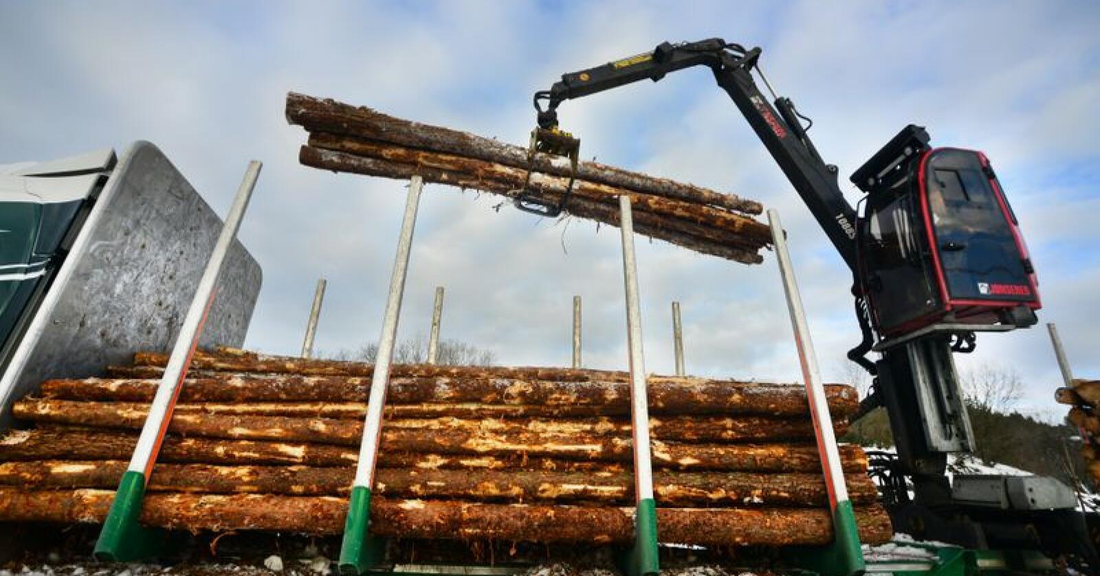 Skognæringen har store muligheter i det grønne skiftet, mener regjeringen. Foto: Siri Juell Rasmussen