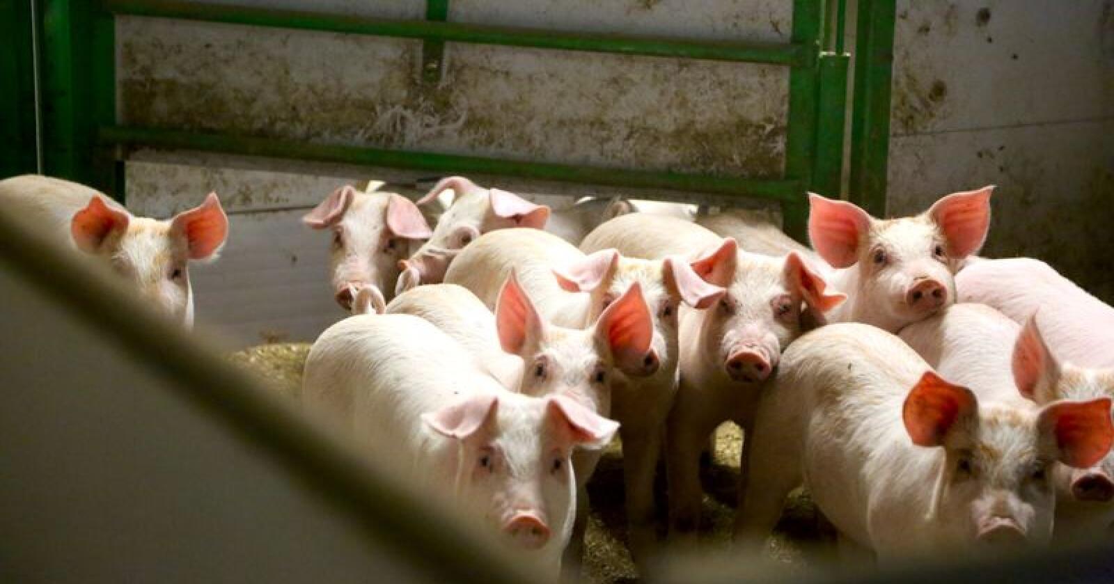 Veterinærforeningen mener at regelmessig kontakt mellom dyreeier og veterinær er en riktig og nødvendig vei å gå for bedre dyrevelferd. Dette krever økte ressurser, mener foreningen.(Illustrasjonsfoto: Bethi Dirdal Jåtun)