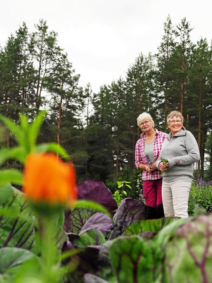 Birgit Svendsen og Gunhild Skattebu driver selskapet Fjellurt. De driver fram utplantingsplanter fra frø og stiklinger, planter ut, steller og høster planter med håndkraft. Foto: Siri Juell Rasmussen