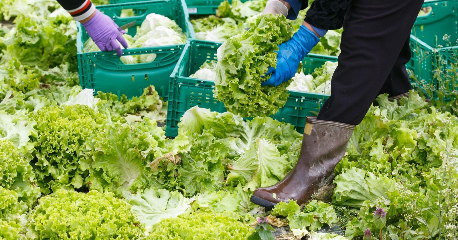 Foretrekker norsk: Coop ønsker mest mulig norsk bær, frukt og grønt i sine butikker, skriver innsenderen. Foto: Mostphotos