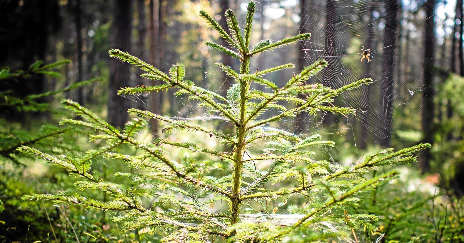 Norske skoger, fjorder og hav har potensial til å levere store mengder bærekraftig produsert og avansert biodrivstoff, skriver Joakim Huage i Bellona. Foto: Mostphotos