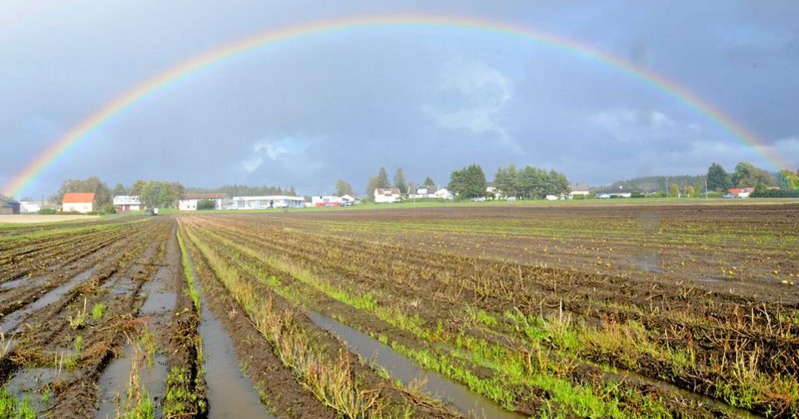 For vått: Store mengdar nedbør gjer det vanskeleg for landbruket å dra nytte av temperaturauken, blir det hevda i ny rapport. Foto: Mariann Tvete