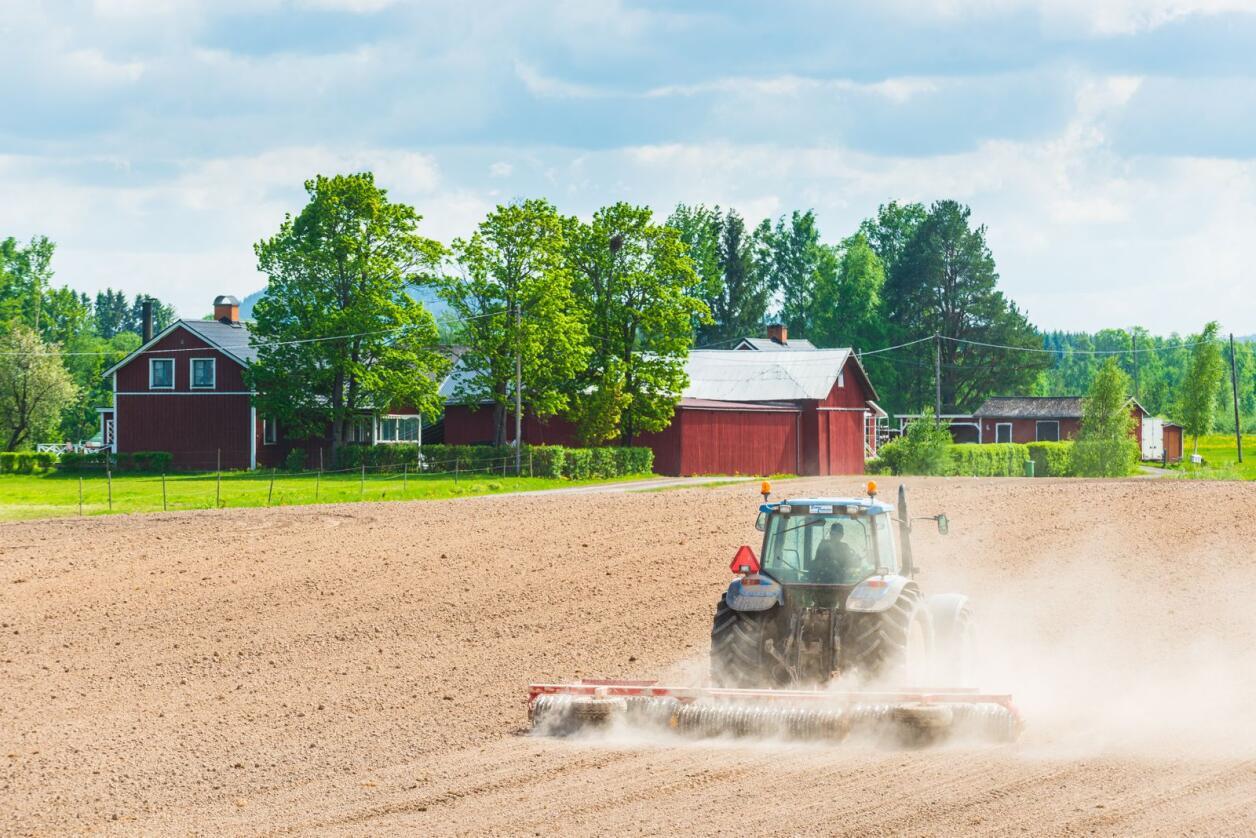 På flatbygdene i Sør-Sverige har 10 gårder blitt til én på bare 25 år. Foto: Mikael Svensson/Mostphotos