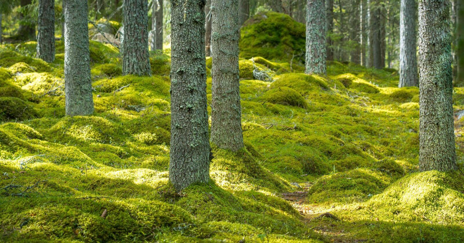 Utfordrer: Vi utfordrer Viken Skog til å legge fram fullstendig dokumentasjon av miljøregistreringene i fire konkrete områder, skriver innsenderne. Foto: Mostphotos