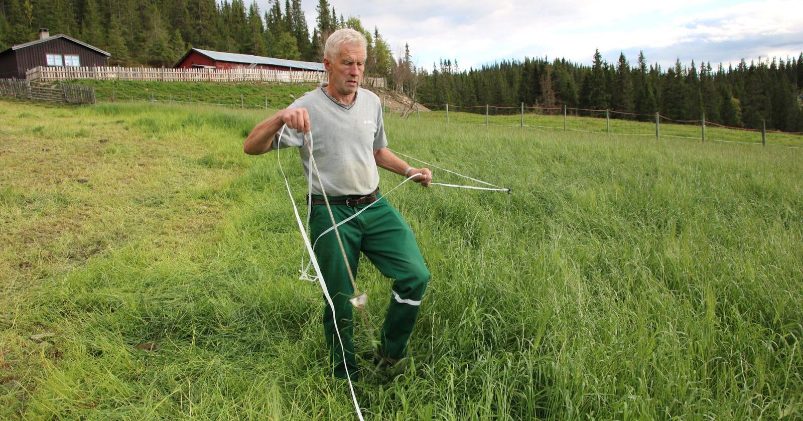 –  For å unngå at kyrne tråkker ned graset, burde jeg helst ha flyttet gjerdestolpene 3 - 4 ganger om dagen, sier Eivind Bergseth. Her utvider han beitet.