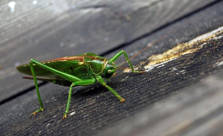 Vi vet ikke hvordan det står til med insektene i Norge, men nå setter forskere igang kartlegging. Foto: Jens O. Kvale / SCANPIX