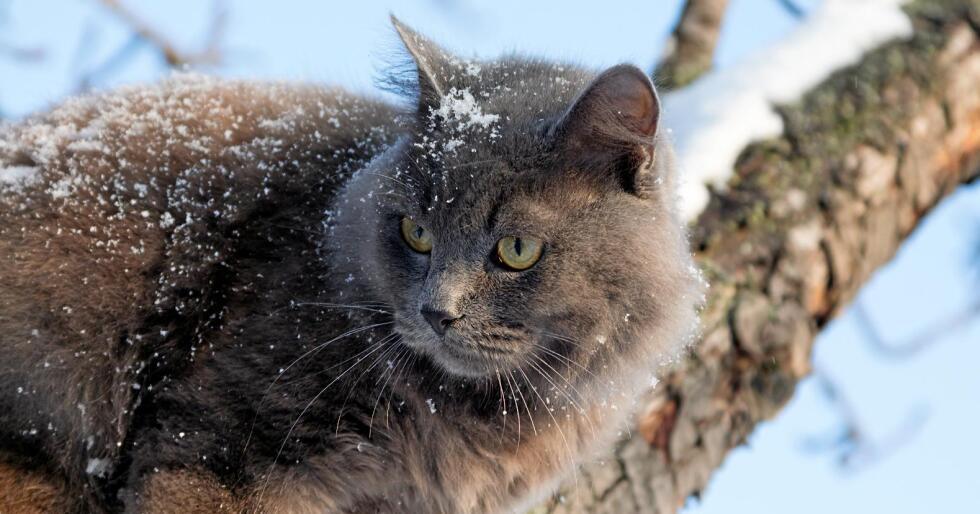 Kaldt: Denne katten koser seg i et tre på dagtid. Katter bør få komme inn i varmen når de trenger det. Foto: Alexey_M / Mostphotos