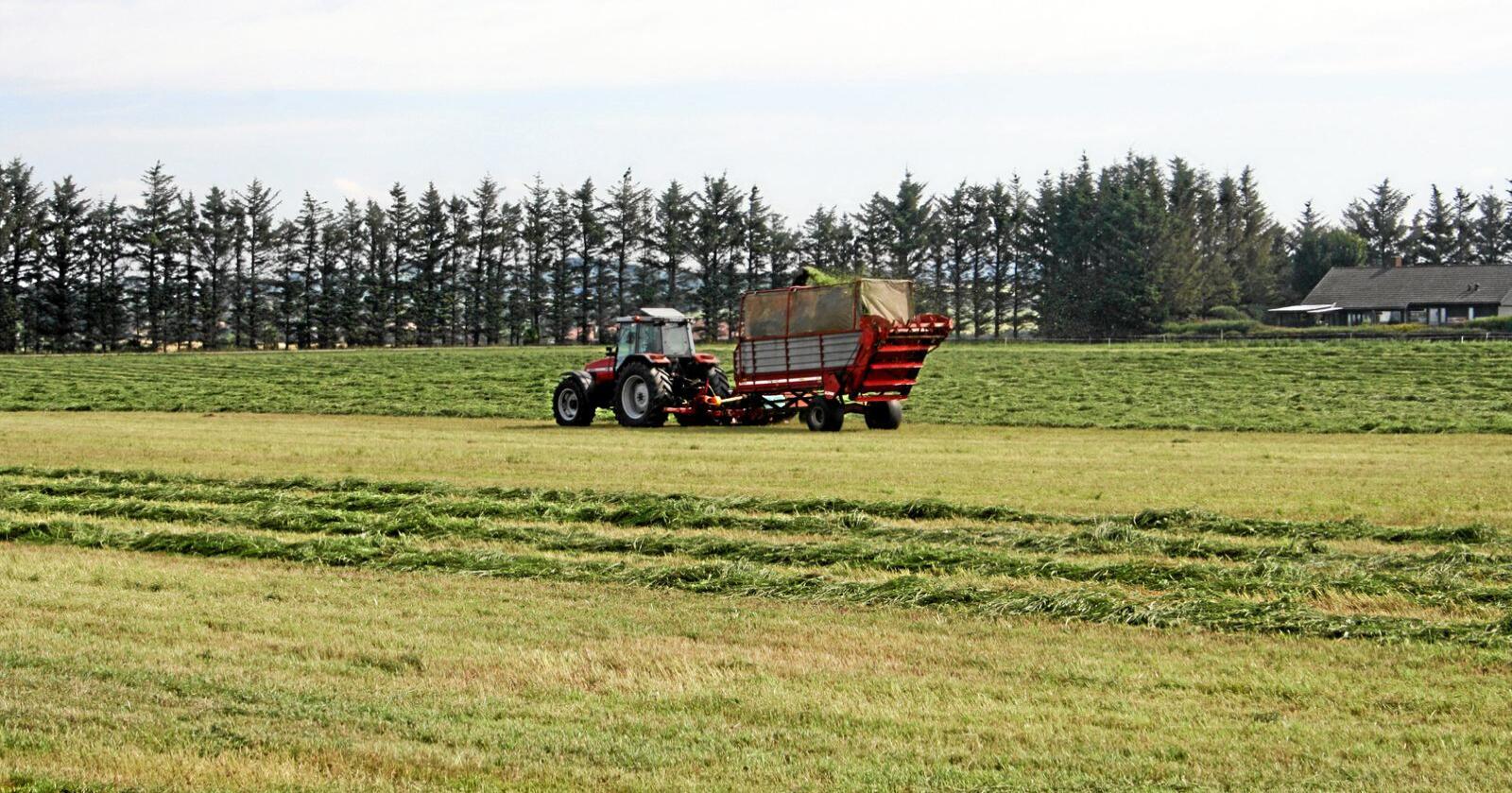 Bondeinntekt: Budsjettnemnda for jordbruket ventar at inntektene til bøndene vil auke kraftig i år. Foto: Bjarne Bekkeheien Aase