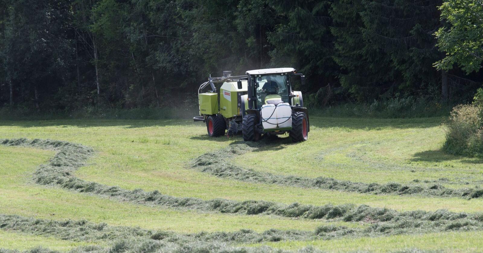 Det er mange produsenter som i mange år har benyttet seg av sesongarbeidere fra tredjeland, sier landbruksministeren. Illustrasjonsfoto: Terje Bendiksby / NTB scanpix